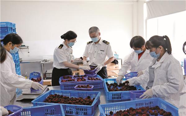 台州首批杨梅远销海外备受青睐销量翻倍