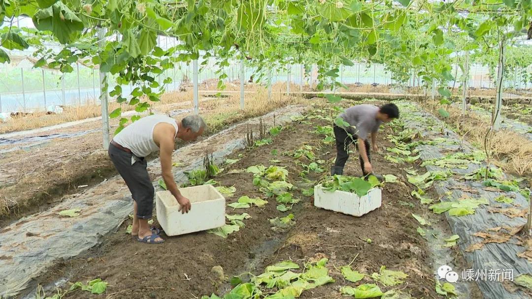 三界、甘霖、崇仁…200多亩受淹,嵊州农户发了愁!接下来的天气如何呢?
