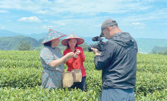 央视网聚焦我县茶产业