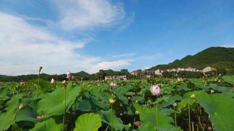 人民日报:山海协作升级 浙江着力推动山区26县跨越式高质量发展