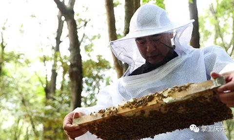 """国家公园里养中蜂 酿出生态""""致富蜜"""""""