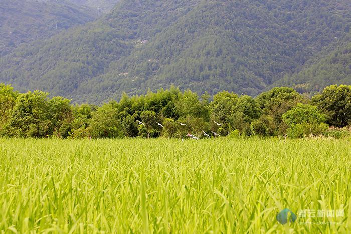 秋初的田野 孕育丰收的希望