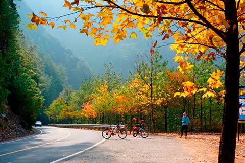 庆元秋色惊艳来袭!你见过最美的秋景是哪里?