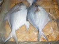 海鲜特产-鲳鱼介绍