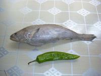 海鲜特产-鮸鱼介绍