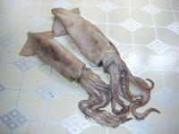 海鲜特产-鱿鱼介绍