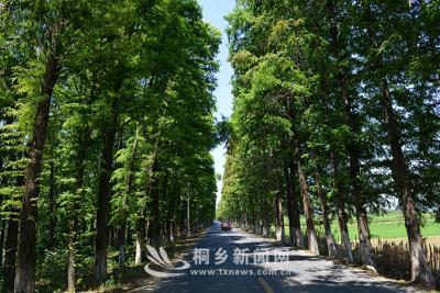 美丽乡村龙翔村