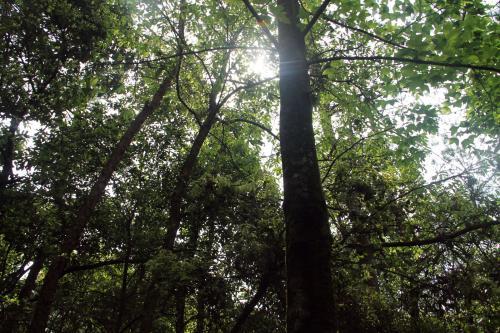 球川古树林:走进一段尘封的历史