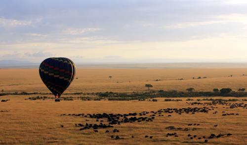 探访肯尼亚野生动物