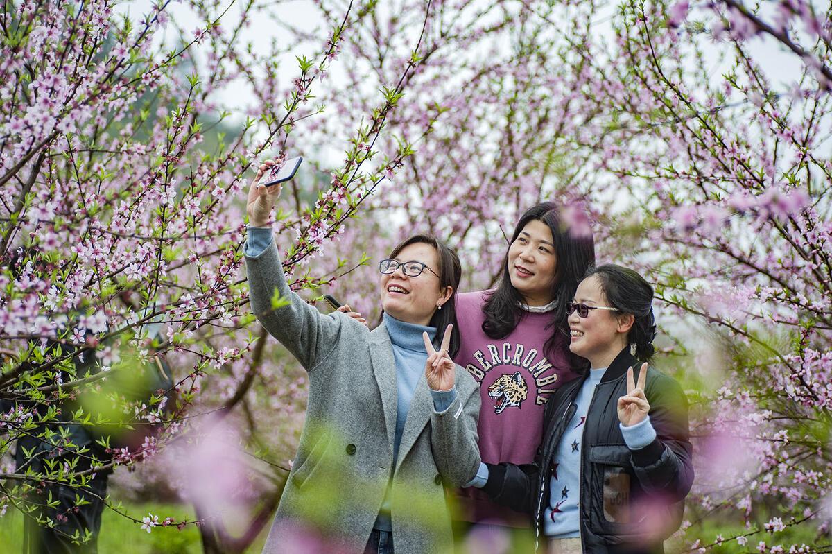 相约石林桃花节